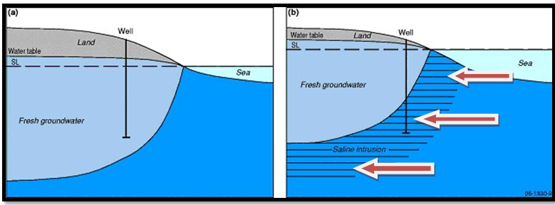 Saltwater Intrusion | Planning for Coastal Change in Levy County